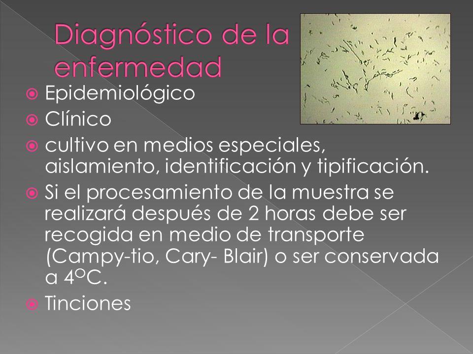 Epidemiológico Clínico cultivo en medios especiales, aislamiento, identificación y tipificación. Si el procesamiento de la muestra se realizará despué