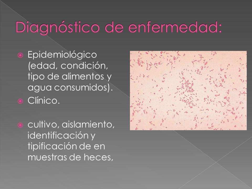 Epidemiológico (edad, condición, tipo de alimentos y agua consumidos). Clínico. cultivo, aislamiento, identificación y tipificación de en muestras de