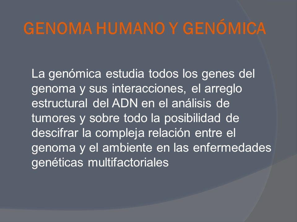 GENOMA HUMANO Y GENÓMICA La genómica estudia todos los genes del genoma y sus interacciones, el arreglo estructural del ADN en el análisis de tumores
