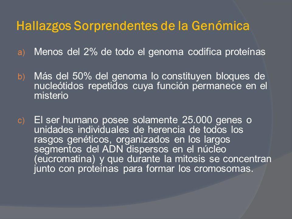 Hallazgos Sorprendentes de la Genómica a) Menos del 2% de todo el genoma codifica proteínas b) Más del 50% del genoma lo constituyen bloques de nucleó