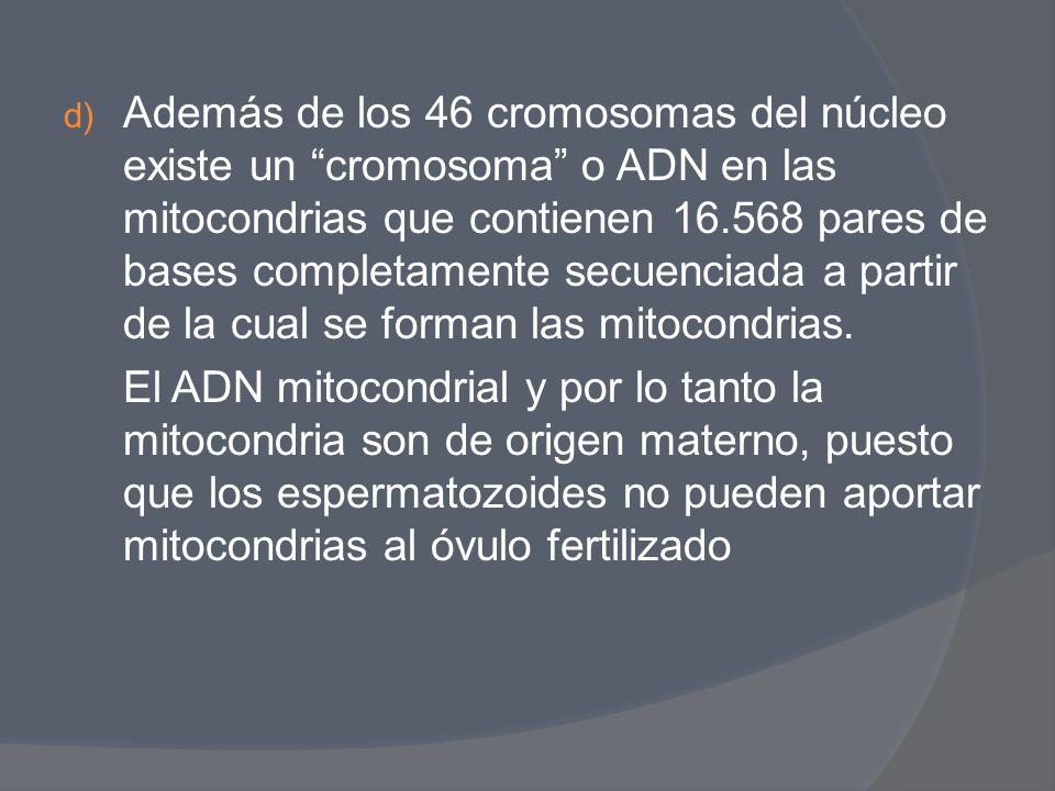 d) Además de los 46 cromosomas del núcleo existe un cromosoma o ADN en las mitocondrias que contienen 16.568 pares de bases completamente secuenciada