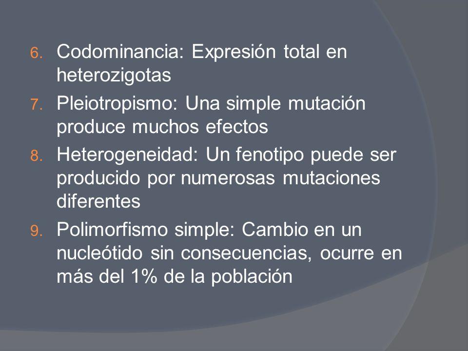 6. Codominancia: Expresión total en heterozigotas 7. Pleiotropismo: Una simple mutación produce muchos efectos 8. Heterogeneidad: Un fenotipo puede se