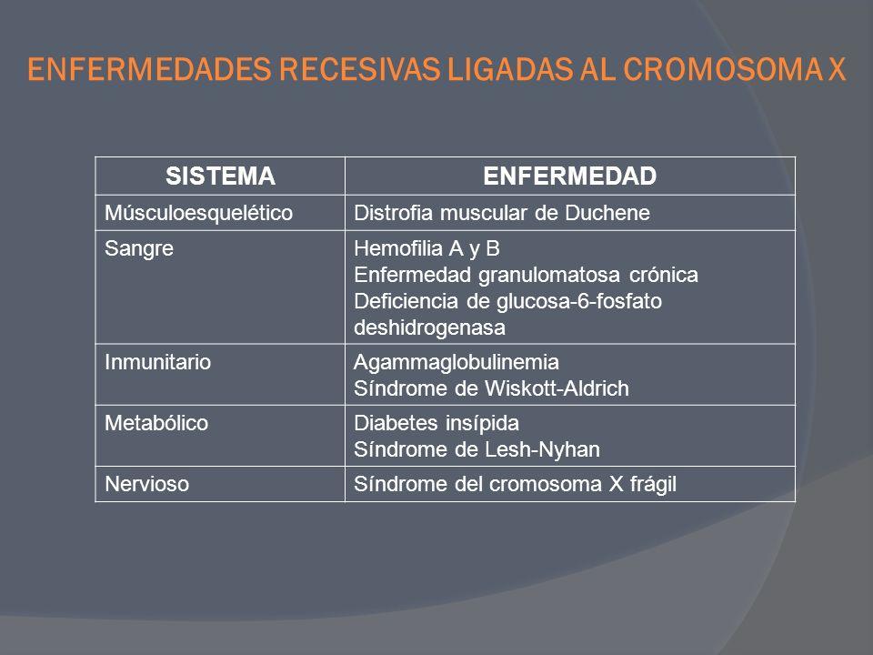 ENFERMEDADES RECESIVAS LIGADAS AL CROMOSOMA X SISTEMAENFERMEDAD MúsculoesqueléticoDistrofia muscular de Duchene SangreHemofilia A y B Enfermedad granu
