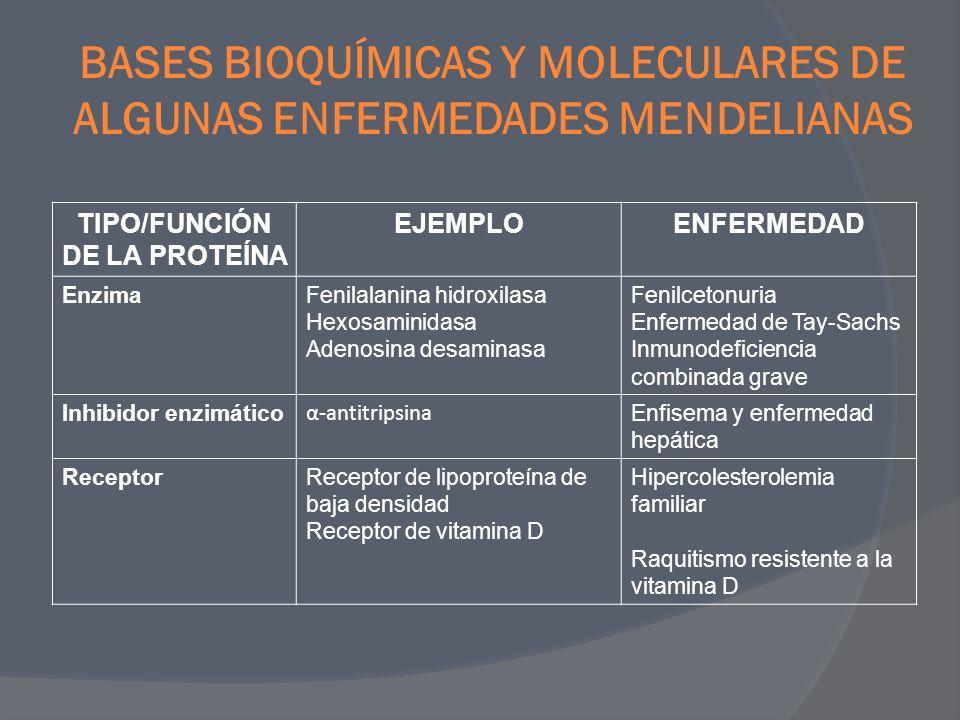 TIPO/FUNCIÓN DE LA PROTEÍNA EJEMPLOENFERMEDAD Transporte Oxígeno Iones Hemoglobina Regulador de la conductancia transmembrana de la fibrosis quística Talasemia, anemia de células falciformes Fibrosis quística Estructural Extracelular Membrana celular Colágeno Fibrina Distrofina Espectrina, anquirina o proteína 4.1 Osteogénesis imperfecta, síndrome de Ehlers- Danlos Síndrome de Marfan Distrofia muscular de Duchene/Becher Esferocitosis hereditaria HemostasiaFactor VIIIHemofilia A Regulación del crecimiento Proteína Rb Neurofibromina Retinoblastoma hereditario Neurofibromatosis tipo 1