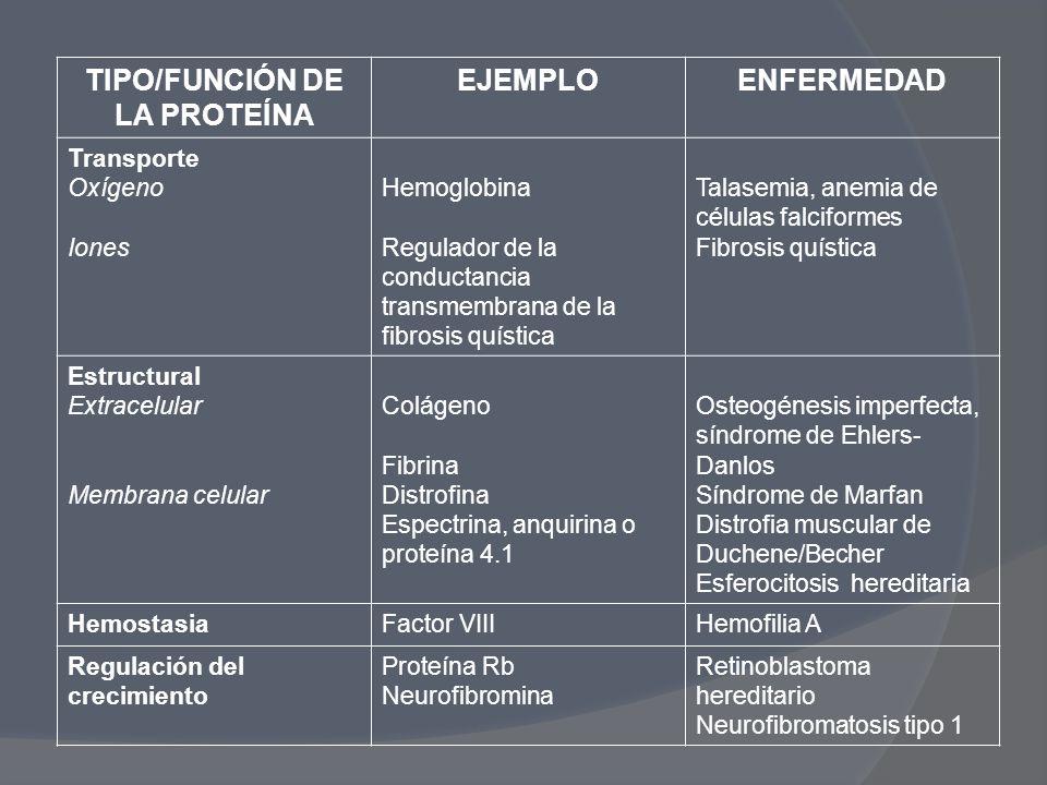 TIPO/FUNCIÓN DE LA PROTEÍNA EJEMPLOENFERMEDAD Transporte Oxígeno Iones Hemoglobina Regulador de la conductancia transmembrana de la fibrosis quística