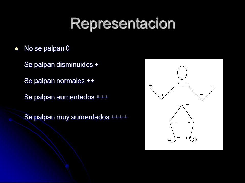 Representacion No se palpan 0 Se palpan disminuidos + Se palpan normales ++ Se palpan aumentados +++ Se palpan muy aumentados ++++ No se palpan 0 Se p