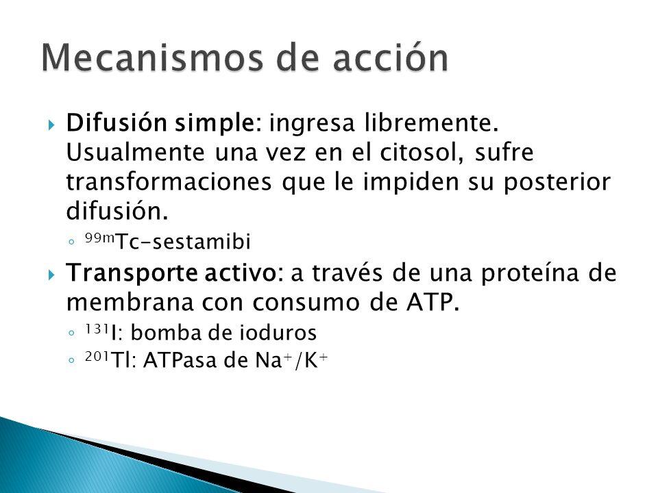 Difusión simple: ingresa libremente. Usualmente una vez en el citosol, sufre transformaciones que le impiden su posterior difusión. 99m Tc-sestamibi T