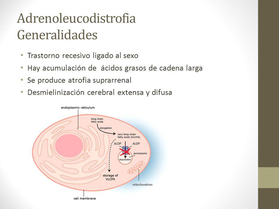Adrenoleucodistrofia Generalidades Trastorno recesivo ligado al sexo Hay acumulación de ácidos grasos de cadena larga Se produce atrofia suprarrenal D