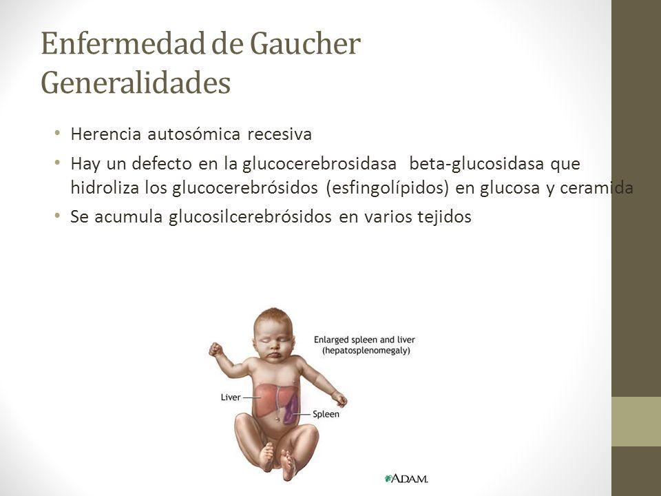 Enfermedad de Gaucher Generalidades Herencia autosómica recesiva Hay un defecto en la glucocerebrosidasa beta-glucosidasa que hidroliza los glucocereb