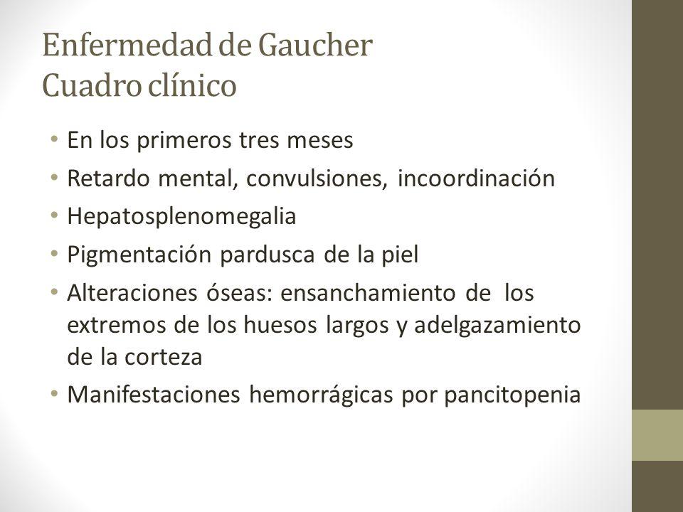 Enfermedad de Gaucher Diagnóstico Histología: células llenas de glucocerebrósidos en aspirados de médula ósea, biopsia hepática Ausencia de actividad de glucocerebrosidasas en cultivos celulares