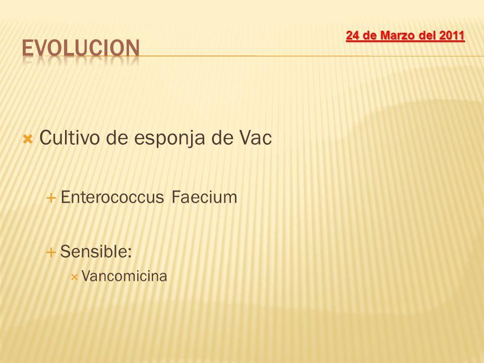 Cultivo de esponja de Vac Enterococcus Faecium Sensible: Vancomicina 24 de Marzo del 2011