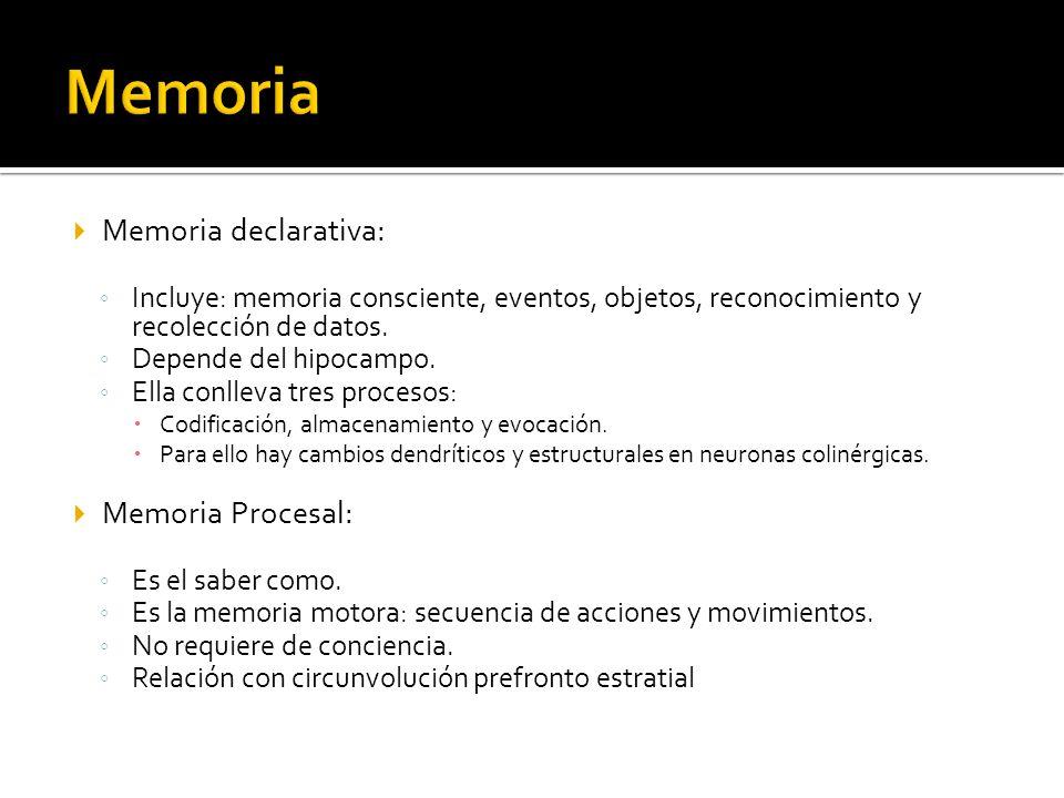 Memoria declarativa: Incluye: memoria consciente, eventos, objetos, reconocimiento y recolección de datos. Depende del hipocampo. Ella conlleva tres p
