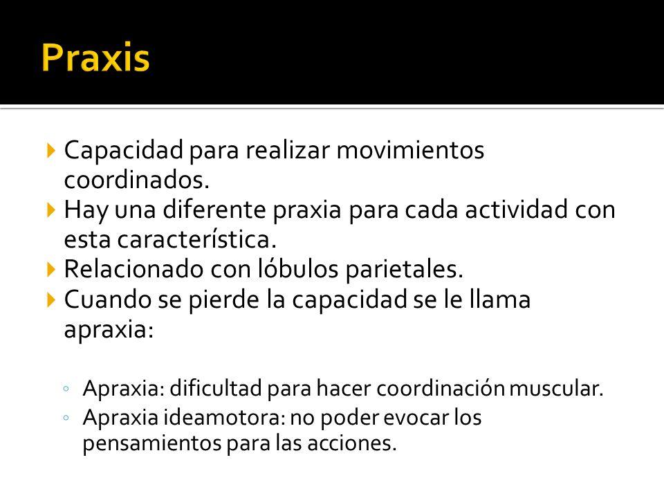Capacidad para realizar movimientos coordinados. Hay una diferente praxia para cada actividad con esta característica. Relacionado con lóbulos parieta