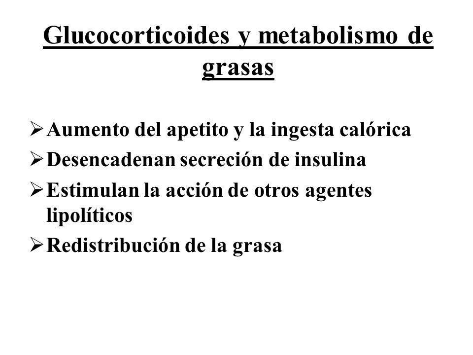 Glucocorticoides y metabolismo de grasas Aumento del apetito y la ingesta calórica Desencadenan secreción de insulina Estimulan la acción de otros age
