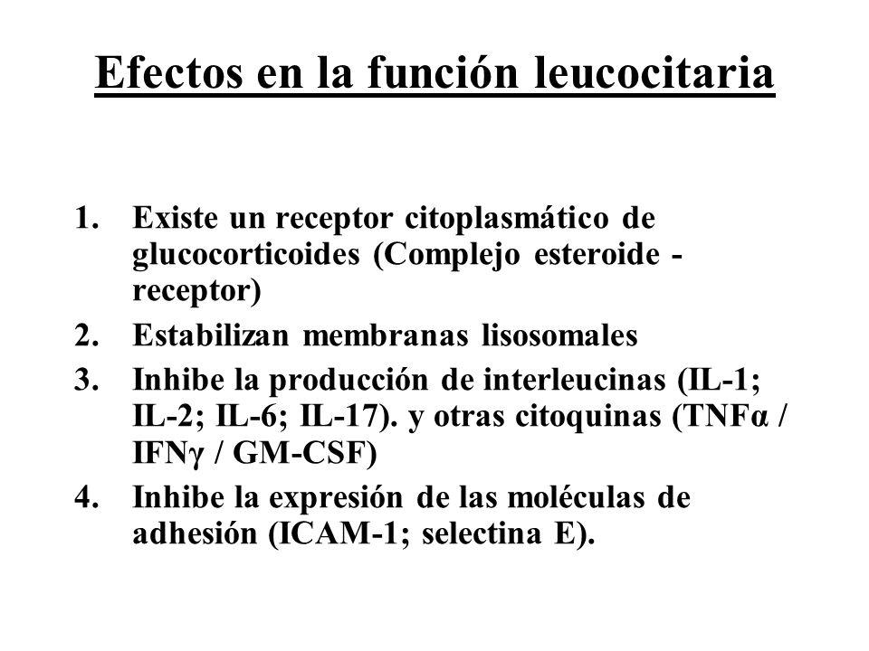 Efectos en la función leucocitaria 1.Existe un receptor citoplasmático de glucocorticoides (Complejo esteroide - receptor) 2.Estabilizan membranas lis