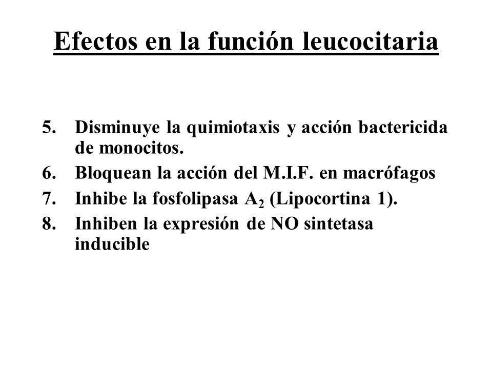 Efectos en la función leucocitaria 5.Disminuye la quimiotaxis y acción bactericida de monocitos. 6.Bloquean la acción del M.I.F. en macrófagos 7.Inhib