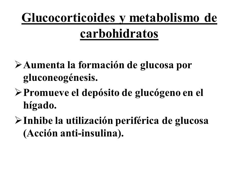 Glucocorticoides y metabolismo de carbohidratos Aumenta la formación de glucosa por gluconeogénesis. Promueve el depósito de glucógeno en el hígado. I