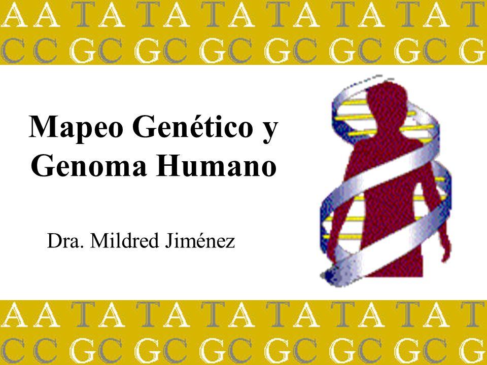 Dra. Mildred Jiménez Mapeo Genético y Genoma Humano