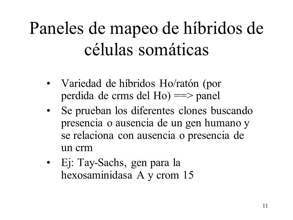 11 Paneles de mapeo de híbridos de células somáticas Variedad de híbridos Ho/ratón (por perdida de crms del Ho) ==> panel Se prueban los diferentes cl