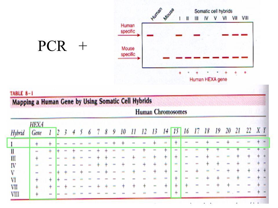 12 PCR +