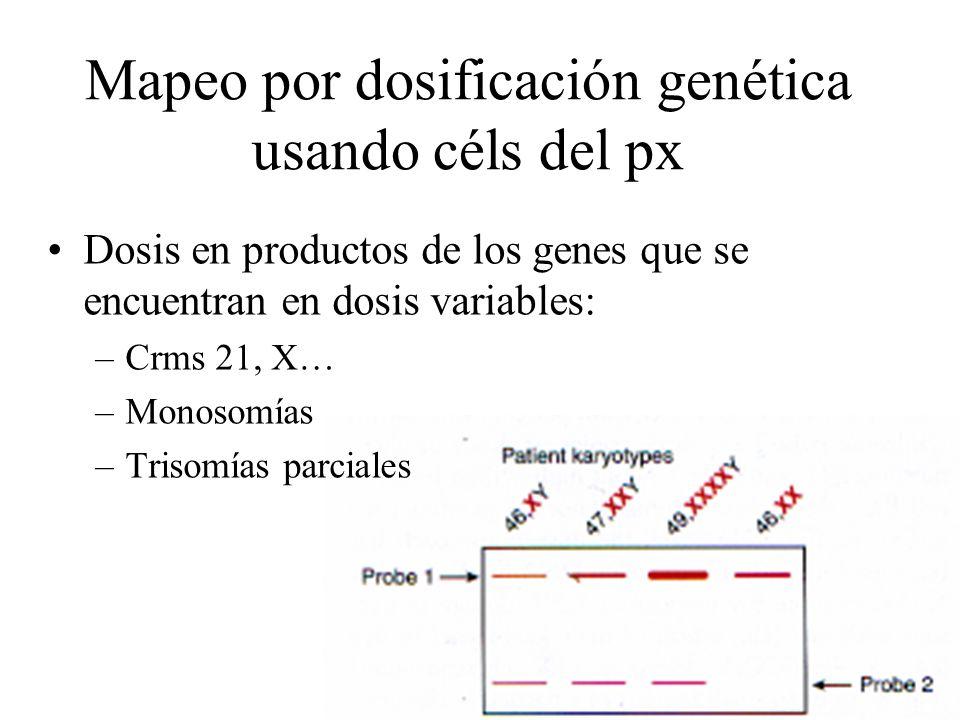 16 Mapeo por dosificación genética usando céls del px Dosis en productos de los genes que se encuentran en dosis variables: –Crms 21, X… –Monosomías –
