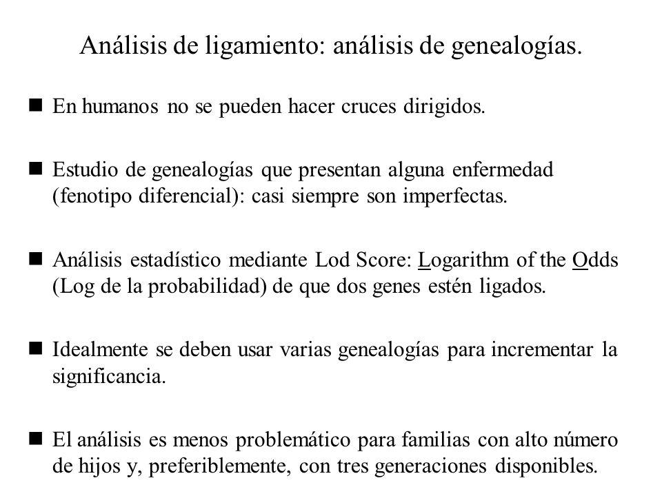 Análisis de ligamiento: análisis de genealogías. En humanos no se pueden hacer cruces dirigidos. Estudio de genealogías que presentan alguna enfermeda