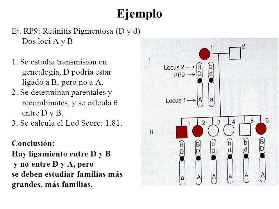 Ejemplo Ej. RP9: Retinitis Pigmentosa (D y d) Dos loci A y B 1. Se estudia transmisión en genealogía, D podría estar ligado a B, pero no a A. 2. Se de