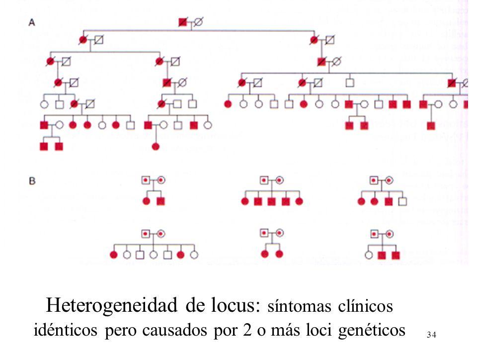 34 Heterogeneidad de locus: síntomas clínicos idénticos pero causados por 2 o más loci genéticos