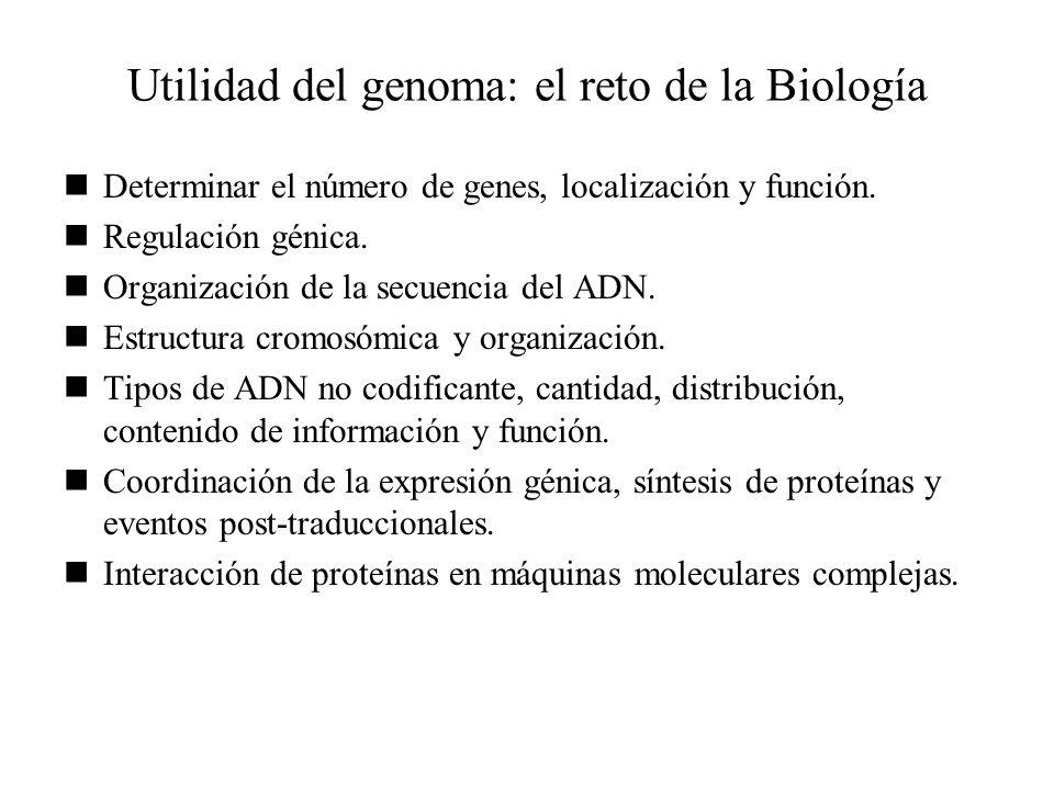 Utilidad del genoma: el reto de la Biología Determinar el número de genes, localización y función. Regulación génica. Organización de la secuencia del