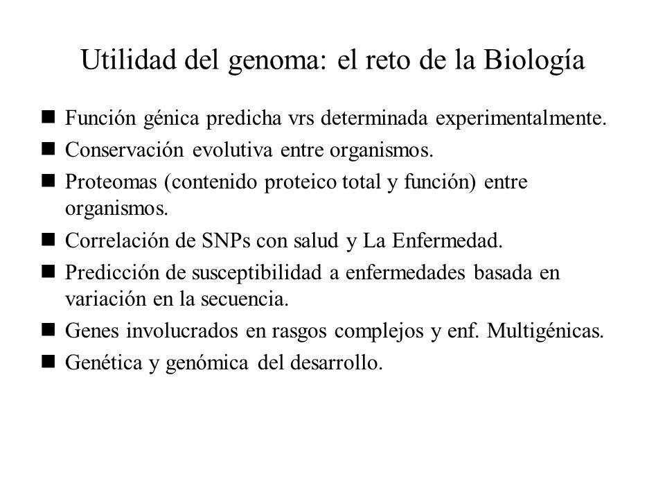 Utilidad del genoma: el reto de la Biología Función génica predicha vrs determinada experimentalmente. Conservación evolutiva entre organismos. Proteo