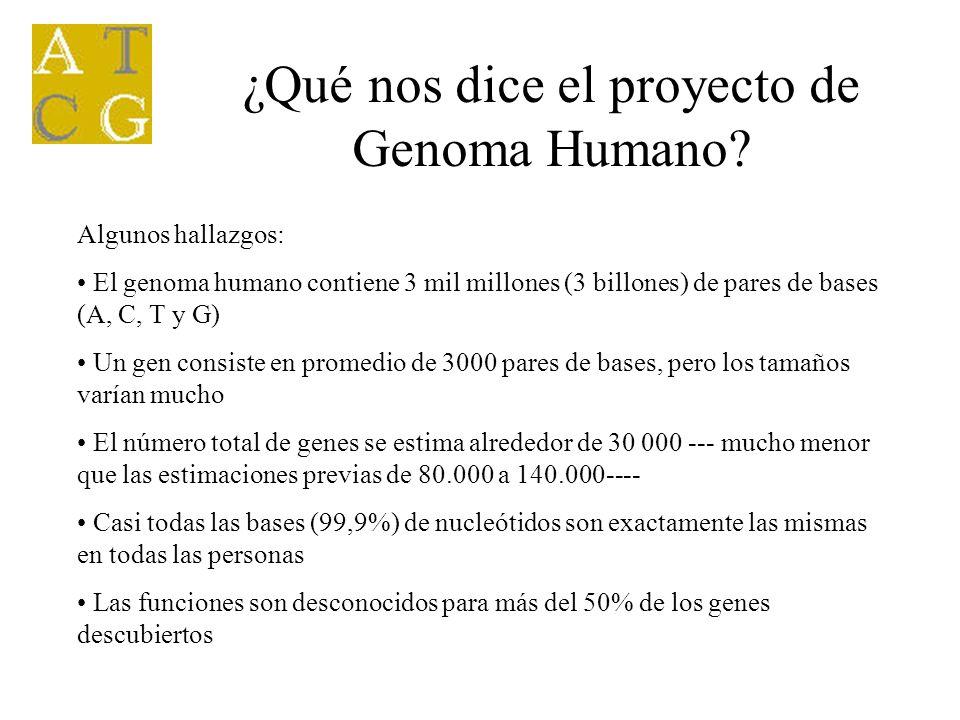 ¿Qué nos dice el proyecto de Genoma Humano? Algunos hallazgos: El genoma humano contiene 3 mil millones (3 billones) de pares de bases (A, C, T y G) U