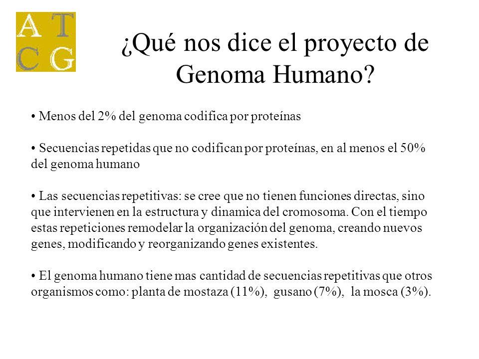 Menos del 2% del genoma codifica por proteínas Secuencias repetidas que no codifican por proteínas, en al menos el 50% del genoma humano Las secuencia