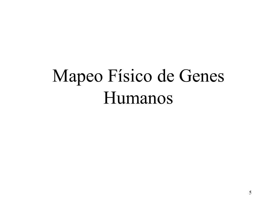 5 Mapeo Físico de Genes Humanos