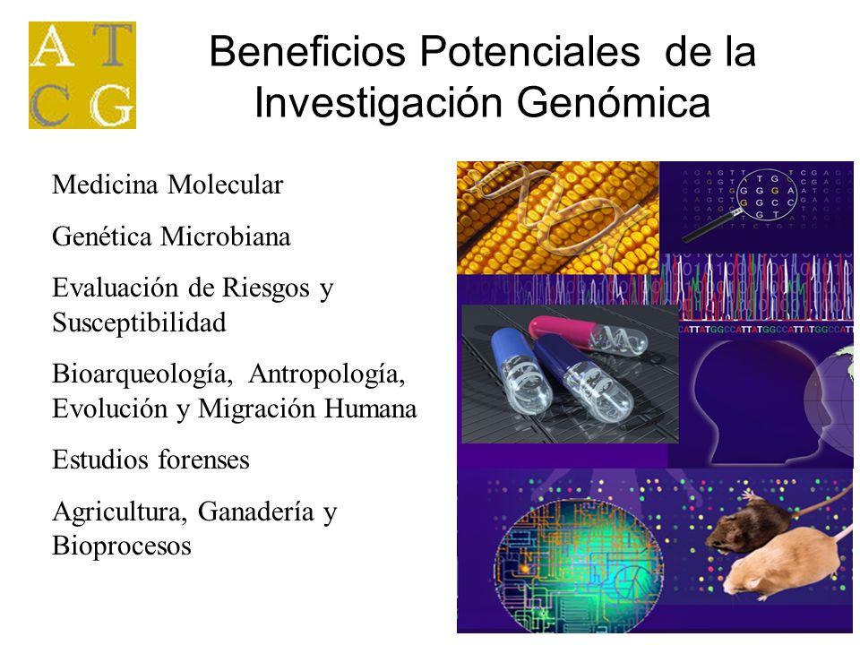 Beneficios Potenciales de la Investigación Genómica Medicina Molecular Genética Microbiana Evaluación de Riesgos y Susceptibilidad Bioarqueología, Ant