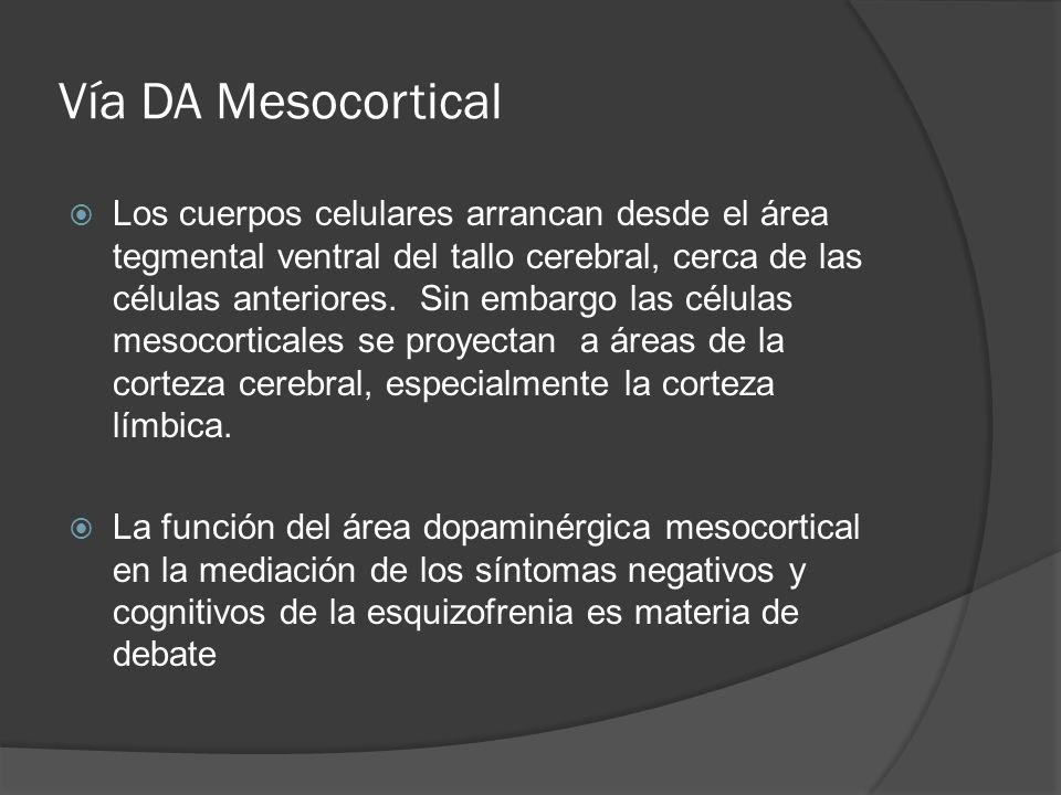 Vía DA Mesocortical Los cuerpos celulares arrancan desde el área tegmental ventral del tallo cerebral, cerca de las células anteriores.