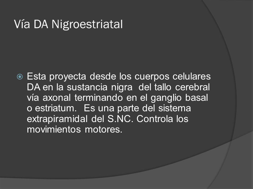 Vía DA Nigroestriatal Esta proyecta desde los cuerpos celulares DA en la sustancia nigra del tallo cerebral vía axonal terminando en el ganglio basal o estriatum.