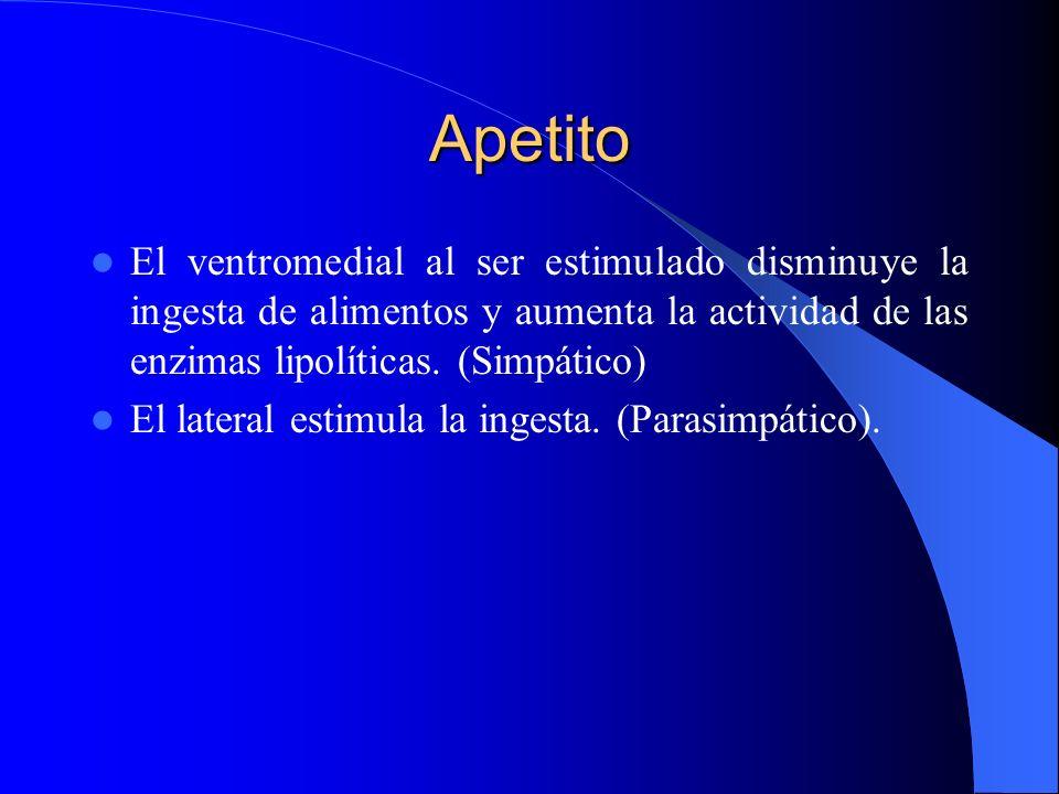 Apetito El ventromedial al ser estimulado disminuye la ingesta de alimentos y aumenta la actividad de las enzimas lipolíticas. (Simpático) El lateral