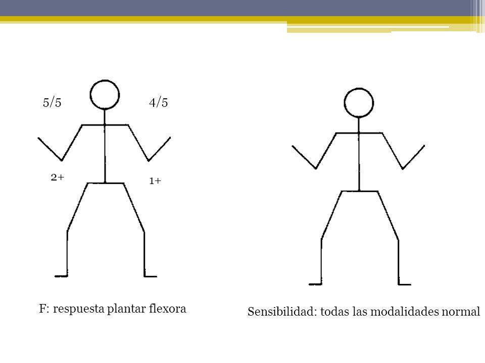 5/54/5 2+ 1+ F: respuesta plantar flexora Sensibilidad: todas las modalidades normal