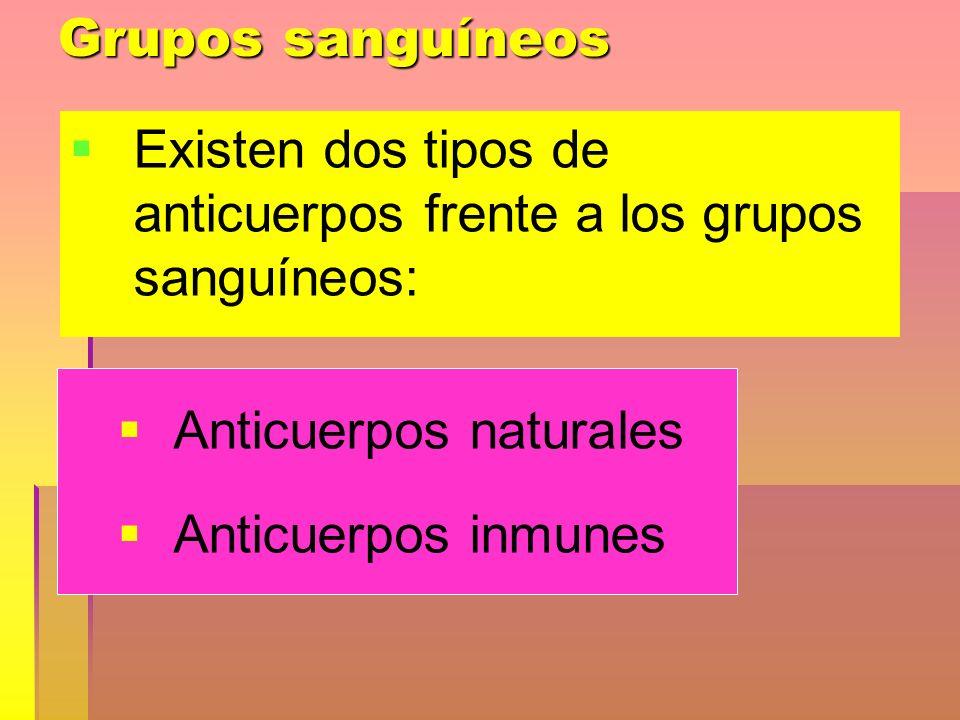 Grupos sanguíneos Existen dos tipos de anticuerpos frente a los grupos sanguíneos: Anticuerpos naturales Anticuerpos inmunes