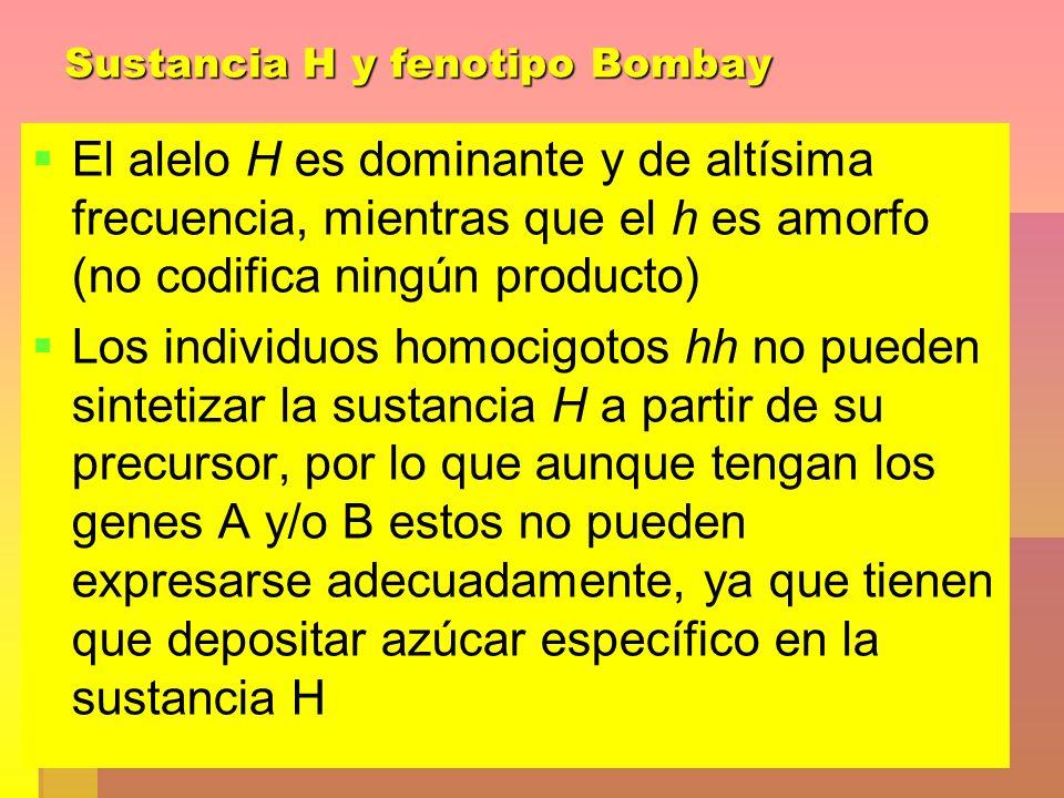 Sustancia H y fenotipo Bombay El alelo H es dominante y de altísima frecuencia, mientras que el h es amorfo (no codifica ningún producto) Los individu