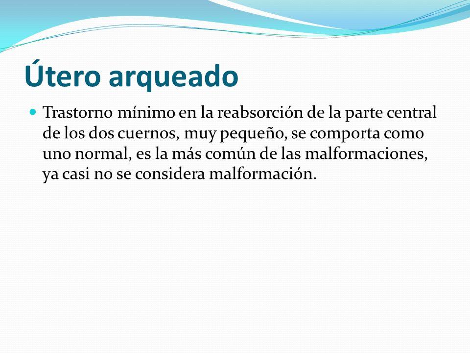 Útero arqueado Trastorno mínimo en la reabsorción de la parte central de los dos cuernos, muy pequeño, se comporta como uno normal, es la más común de