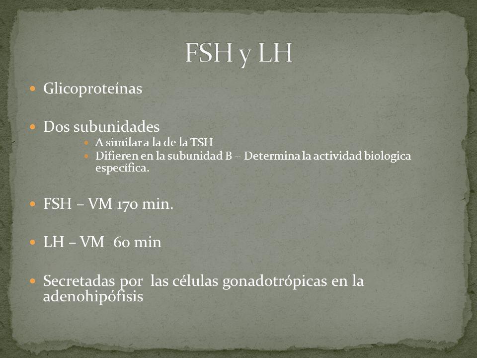 Glicoproteínas Dos subunidades A similar a la de la TSH Difieren en la subunidad B – Determina la actividad biologica específica. FSH – VM 170 min. LH
