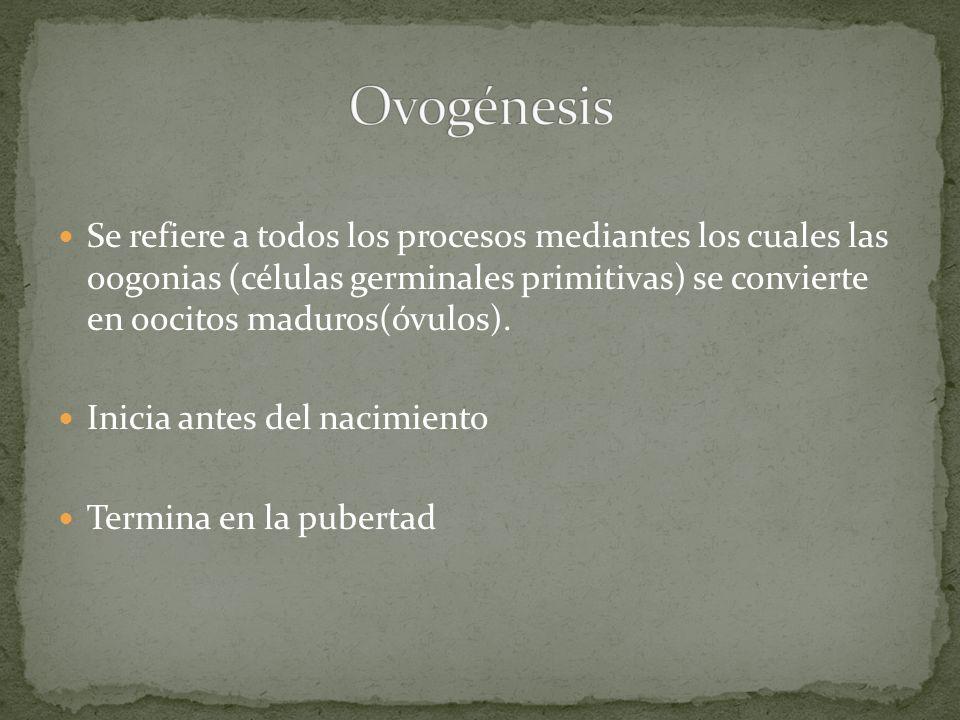 Se refiere a todos los procesos mediantes los cuales las oogonias (células germinales primitivas) se convierte en oocitos maduros(óvulos). Inicia ante