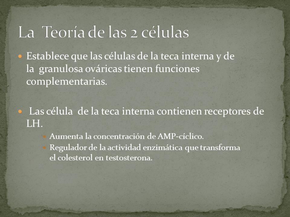 Establece que las células de la teca interna y de la granulosa ováricas tienen funciones complementarias. Las célula de la teca interna contienen rece