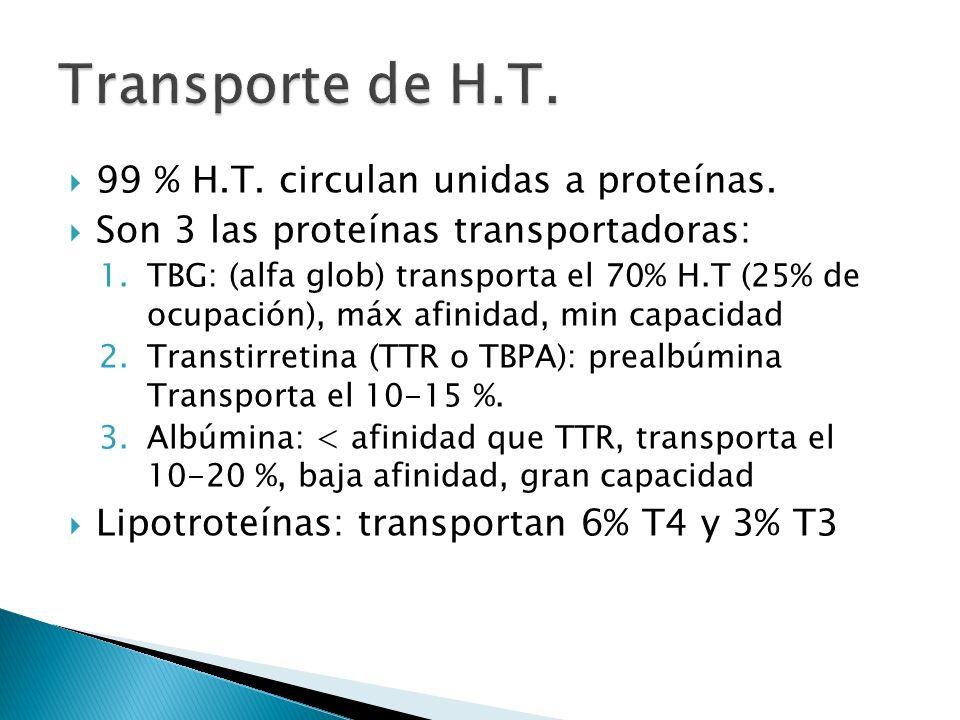 99 % H.T. circulan unidas a proteínas. Son 3 las proteínas transportadoras: 1.TBG: (alfa glob) transporta el 70% H.T (25% de ocupación), máx afinidad,