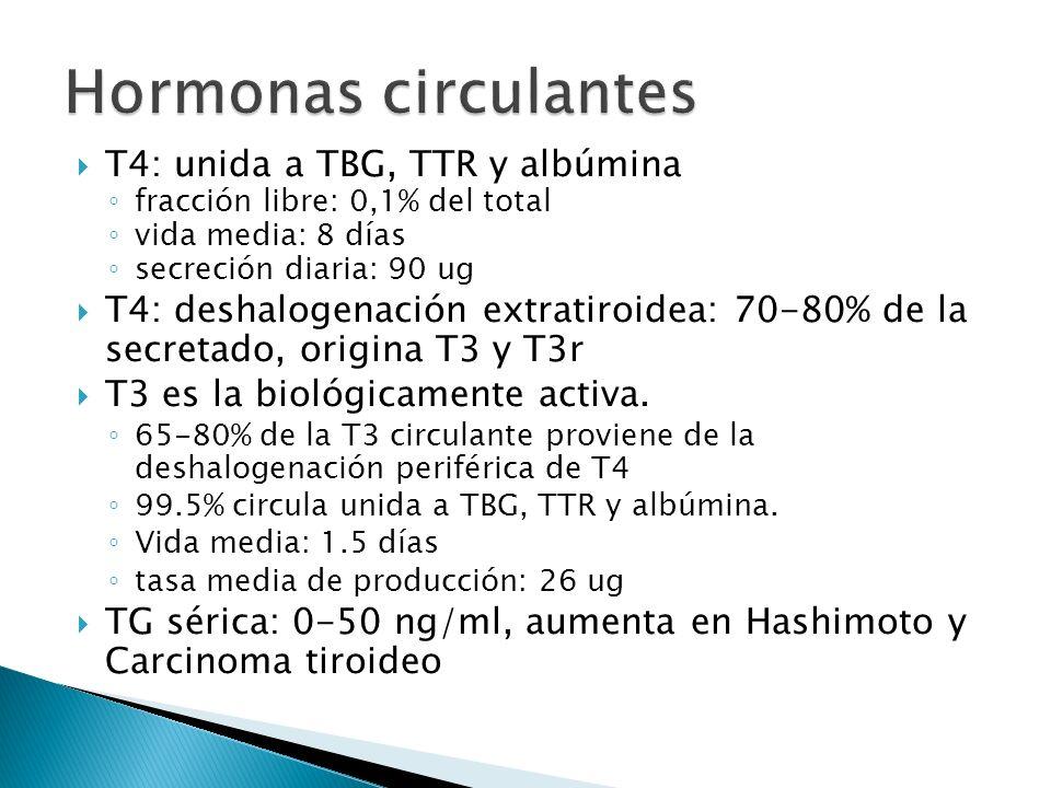 T4: unida a TBG, TTR y albúmina fracción libre: 0,1% del total vida media: 8 días secreción diaria: 90 ug T4: deshalogenación extratiroidea: 70-80% de