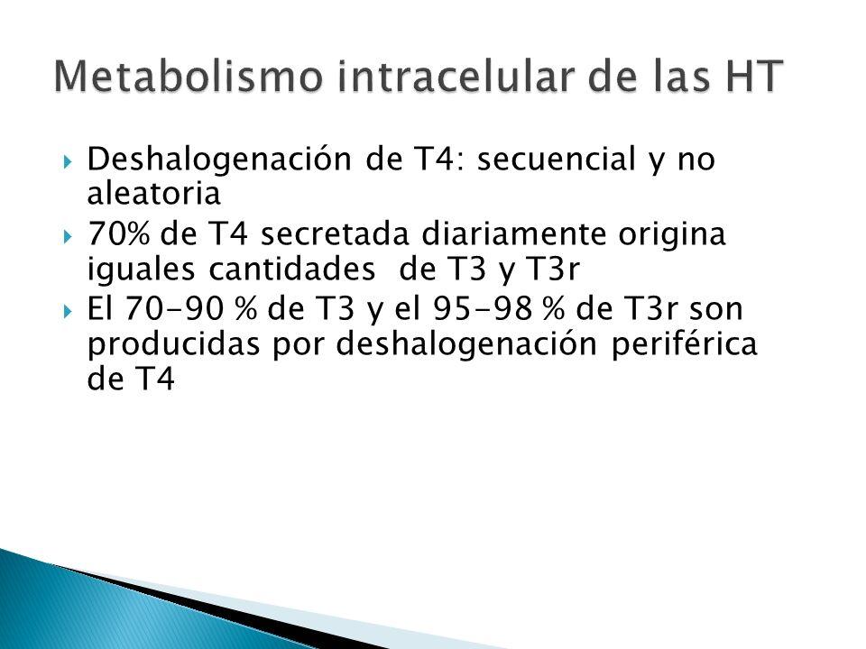 Deshalogenación de T4: secuencial y no aleatoria 70% de T4 secretada diariamente origina iguales cantidades de T3 y T3r El 70-90 % de T3 y el 95-98 %