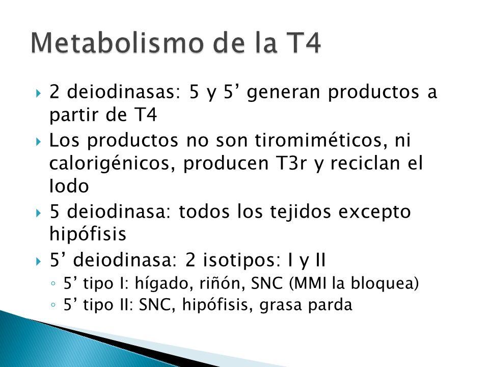2 deiodinasas: 5 y 5 generan productos a partir de T4 Los productos no son tiromiméticos, ni calorigénicos, producen T3r y reciclan el Iodo 5 deiodina
