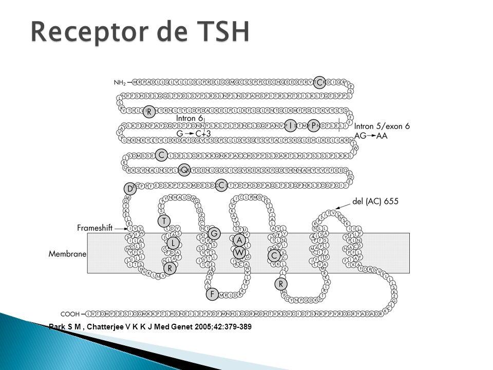 Park S M, Chatterjee V K K J Med Genet 2005;42:379-389 Receptor de TSH