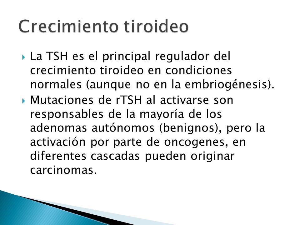 La TSH es el principal regulador del crecimiento tiroideo en condiciones normales (aunque no en la embriogénesis). Mutaciones de rTSH al activarse son